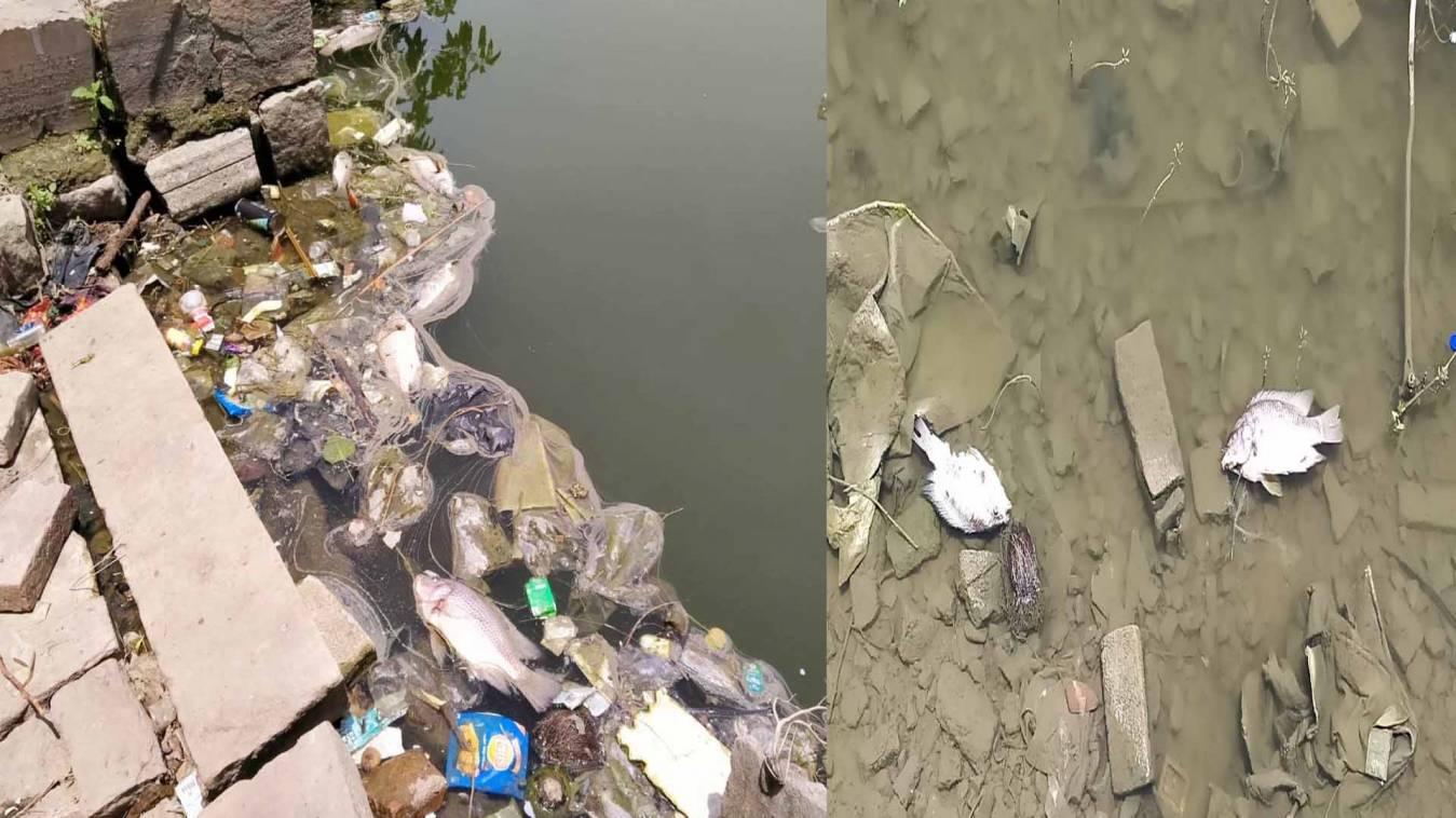 वाराणसी: पिशाचमोचन कुंड में छटपटाते मर गईं कई कुंतल मछलियां, आक्सीजन की कमी से जिना हुआ दुभर