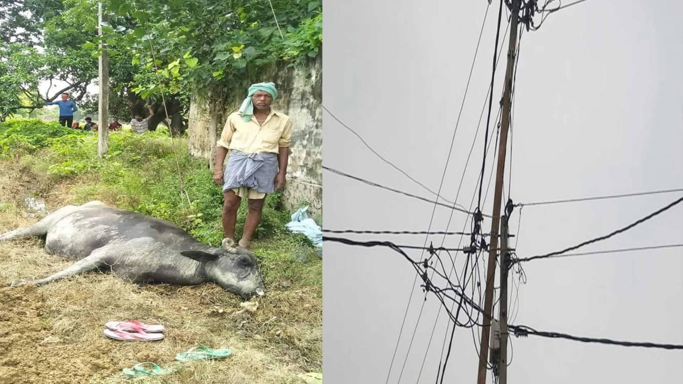 वाराणसी: स्टे वायर में उतरे करंट की चपेट में आने से भैंस की मौत, ग्रामीणों में रोष