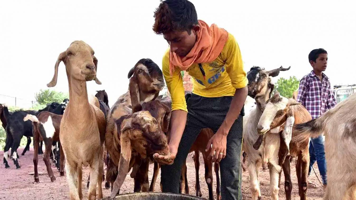 बनारस कीगलियों में सब्जी की तरह बिक रहे बकरें,लॉकडाउन में महंगा मिल रहाबकरा