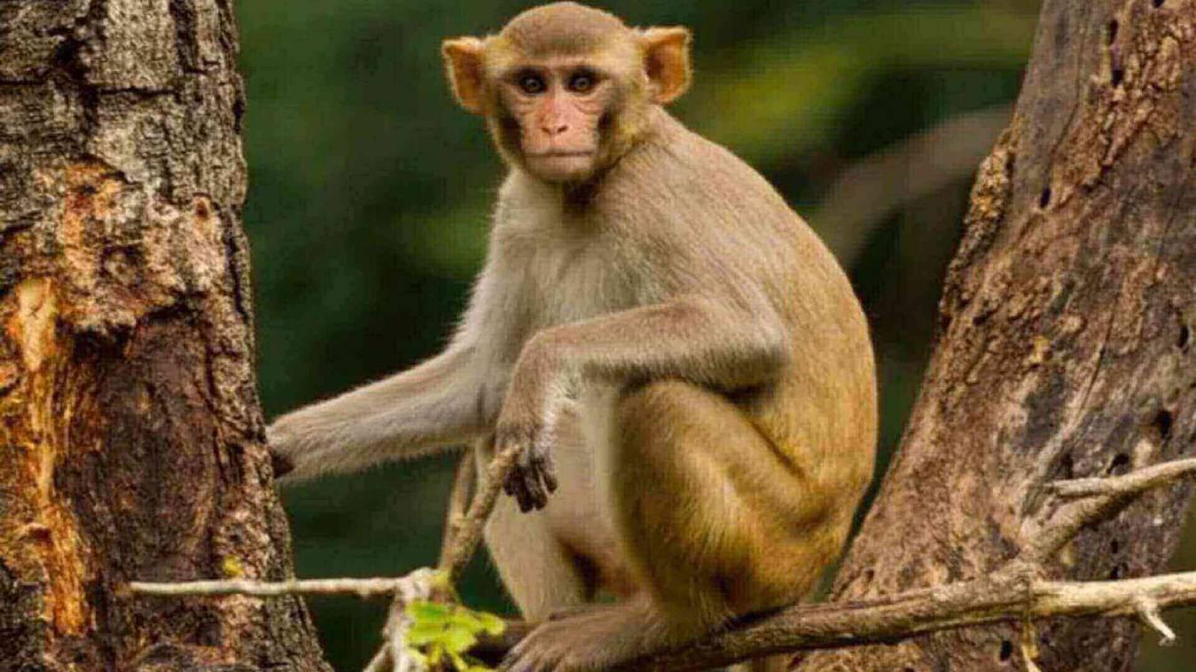 बाइक से बंदर ने निकाले तीन लाख रुपये,पुलिसकर्मियों की सूझबूझ से हुए हासिल