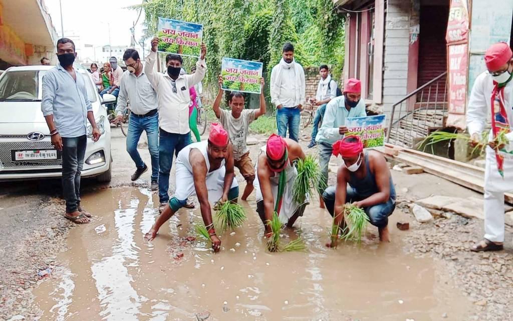 वाराणसी: समाजवादी लोहिया वाहिनी के कार्यकर्ताओं ने की सड़क के गड्ढे में धान की रोपाई